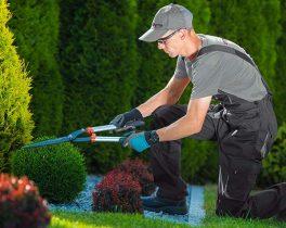 servicios-de-jardineria